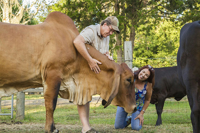compassionate farming with cattle